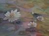 Lilly pond
