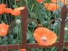 NY-Botanical-May